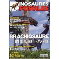 Dinosaures & Fossiles n° 7 - Brachiosaure, un titan du Jurassique